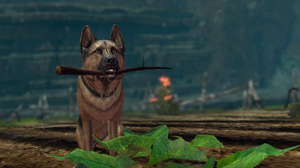 03_mtx_dogharvest